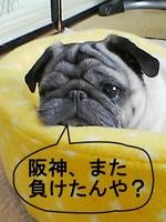 Make_pug_1